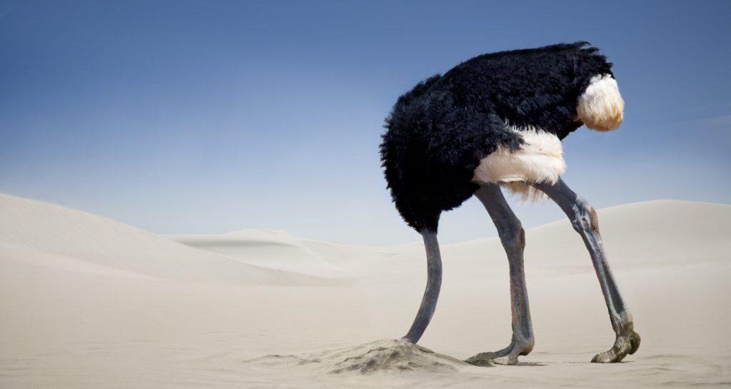 avestruz cabeza escondida